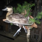Waterfowl Swimming Mount