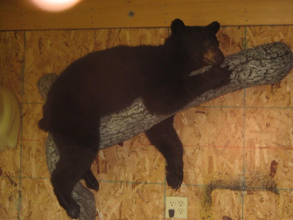 Bear Full Mount