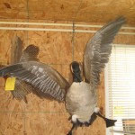 Goose Flying Mount